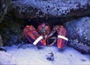 SSC_Lobster_at_Seaside_Center_Web_210-179x130.jpg