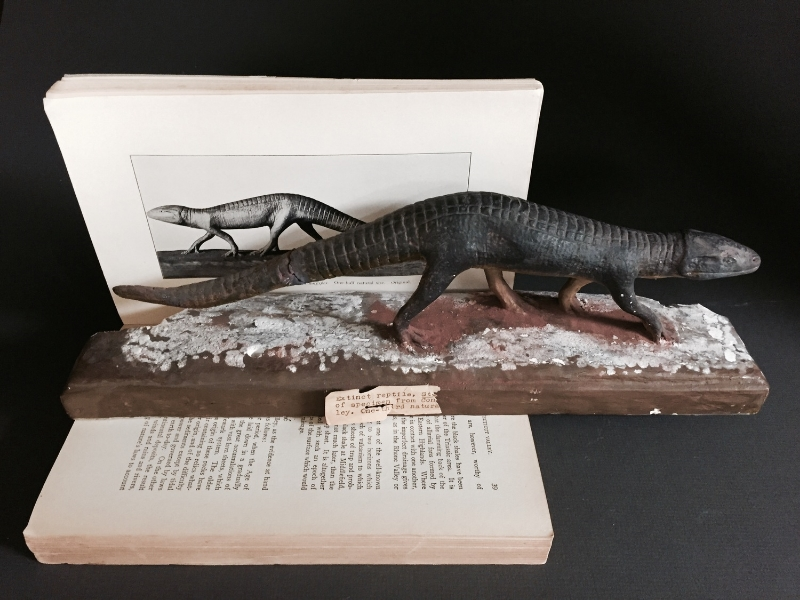 Stegomus (Stegomosuchus) longipes plaster model posed with its illustration. This model is in relatively good condition seeing as how it is approximately 100 years old!