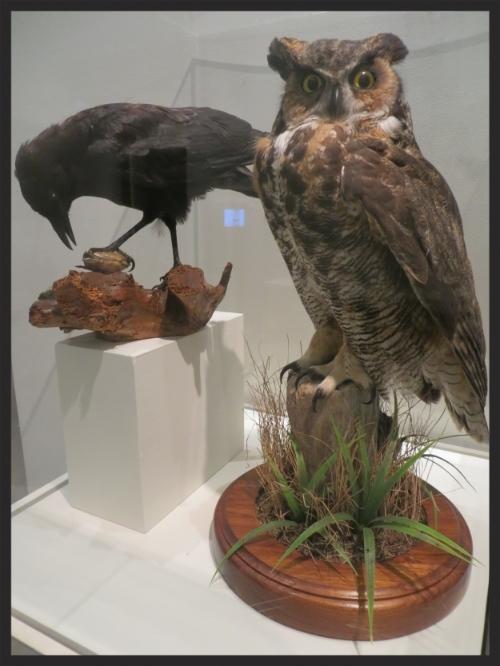 Bird Brains Storage Room No 2
