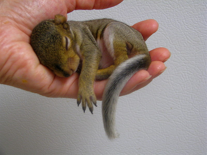 Courtesy of Audrey Take a look at this baby squirrel. Your performance has now improved.