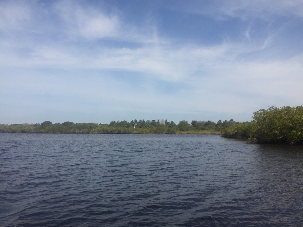 Anclote River in Pinellas County. Less available basking habitat and higher salinity water.