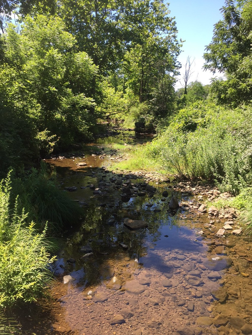 Site two with flowing water in the creek. Photograph by Timothy J. Walsh