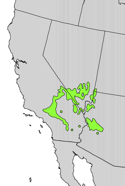 The current range of the Joshua tree