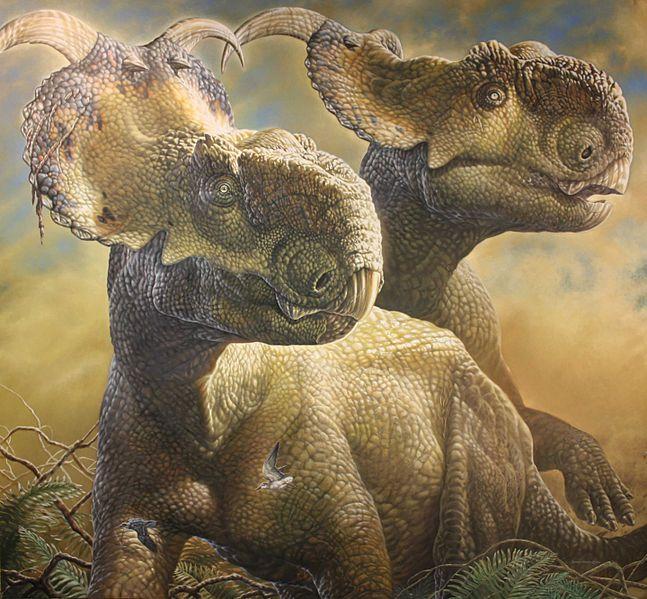 Pachyrhinosaurus_Perotorum_Alaska_copyright_web.jpg