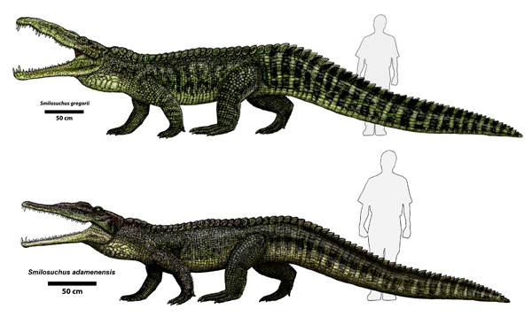 Why Crocodiles Haven't Changed Much in 200 Million Years