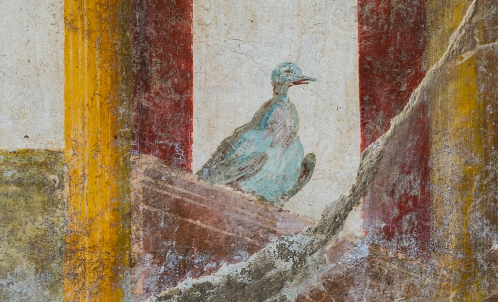 This pigeon decorates a fresco at an ancient Roman site near Pompeii.