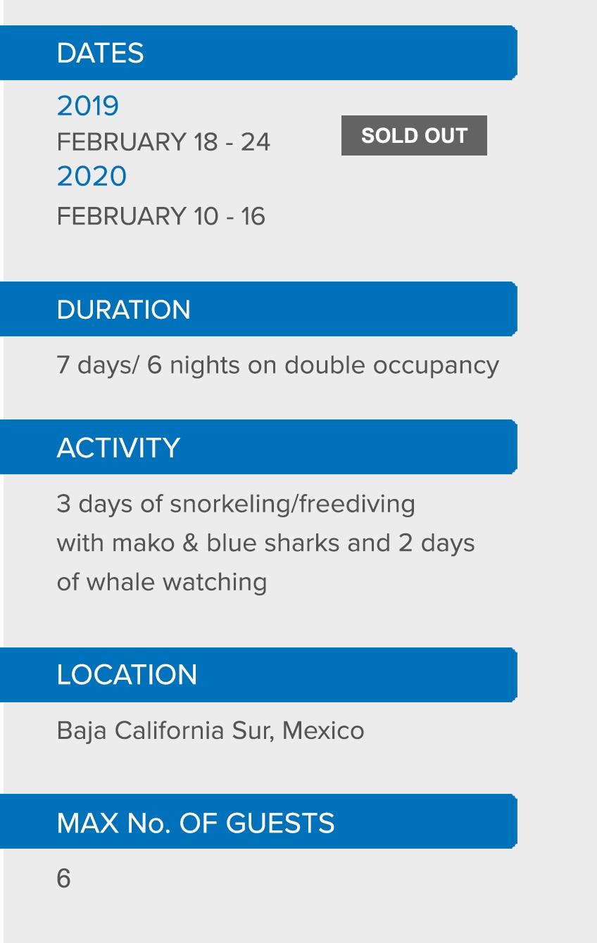MAKO AND BLUE SHARKS DETAILS.jpg