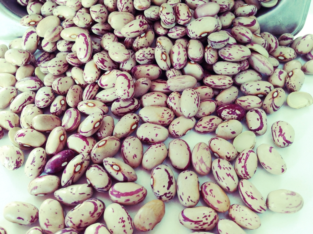 #beanmonth Dried cranberry beans