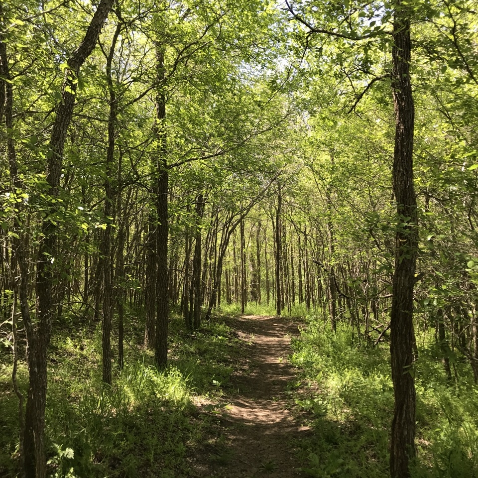 Trail Blazer - There is lots of work two do at Pines and Prairies' three nature preserves and a limited number of PPLT hands, so we need YOU to help maintain the trails and native habitats. This position requires a greater level of commitment as the land is always growing and changing.