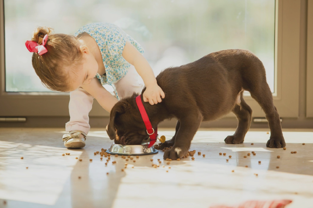 Webinar - Pet Food Experts' Journey to the CloudSeptember 18 2018