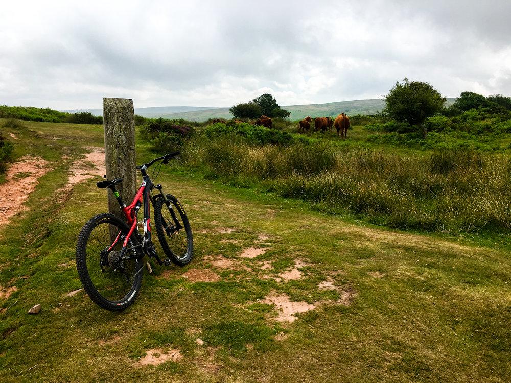 Mountain Biking Southwest England, Quantock Hills