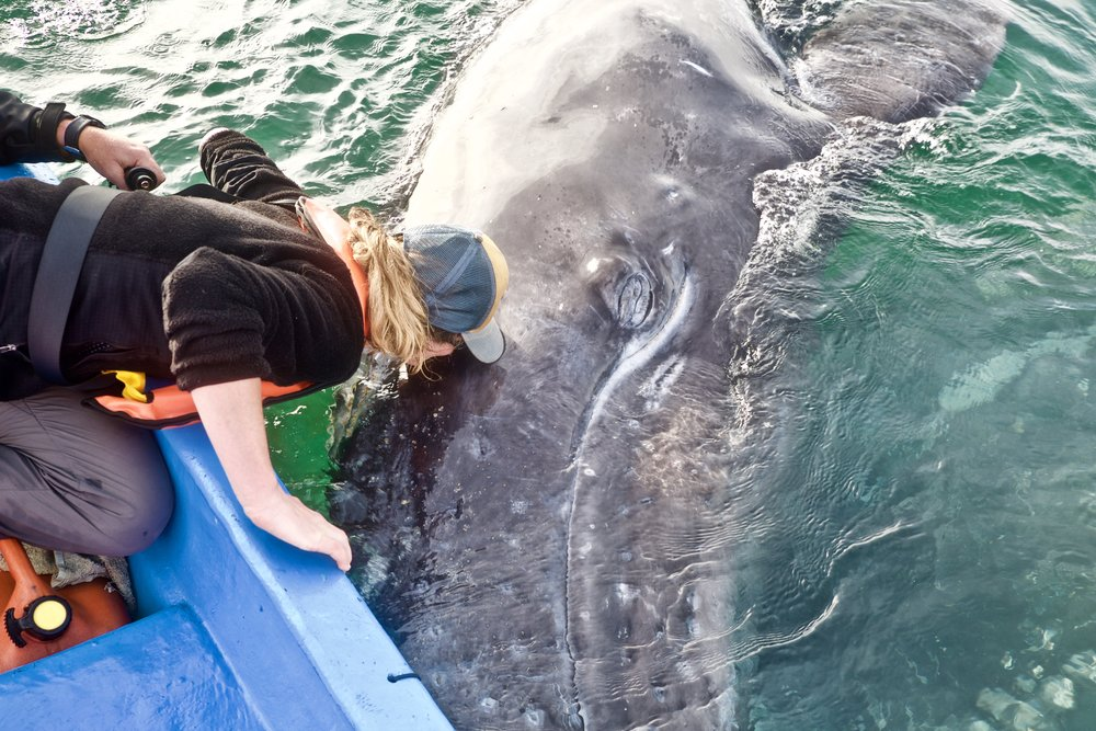 Kissing a whale in Baja