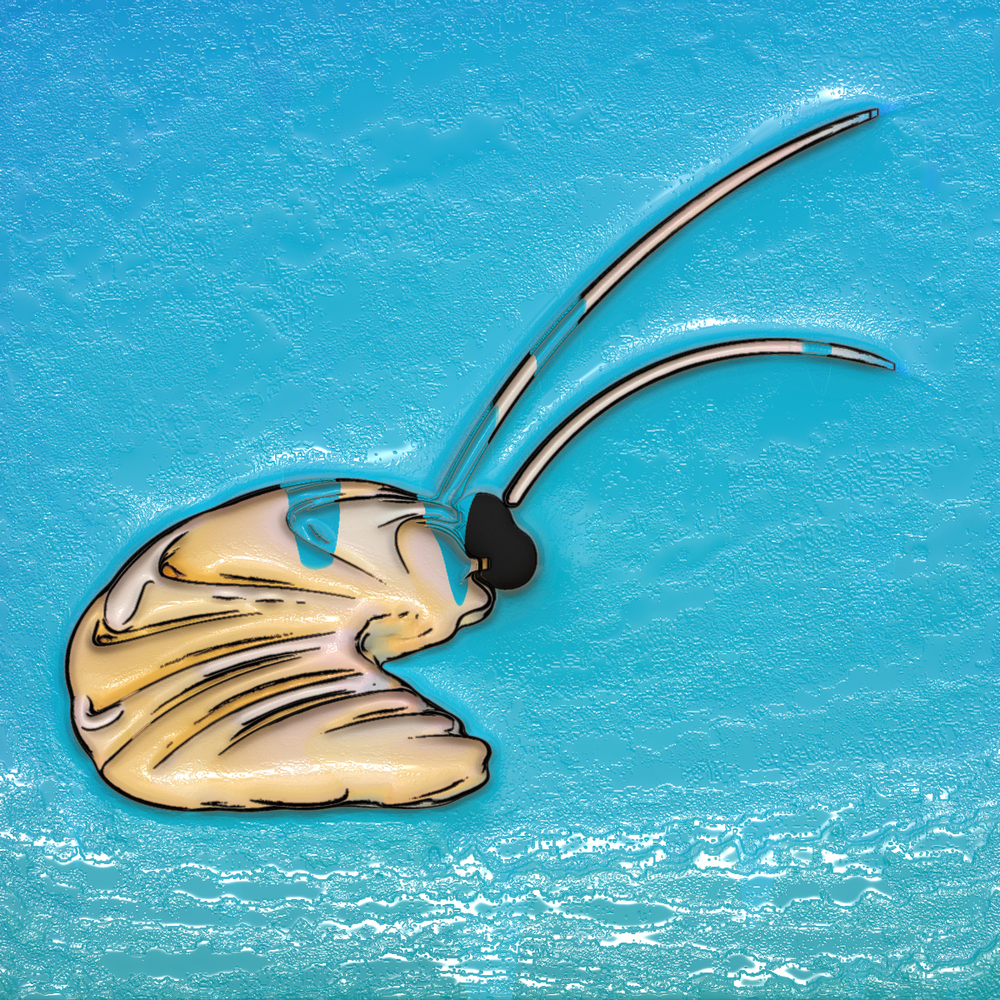 shrimp005.jpg