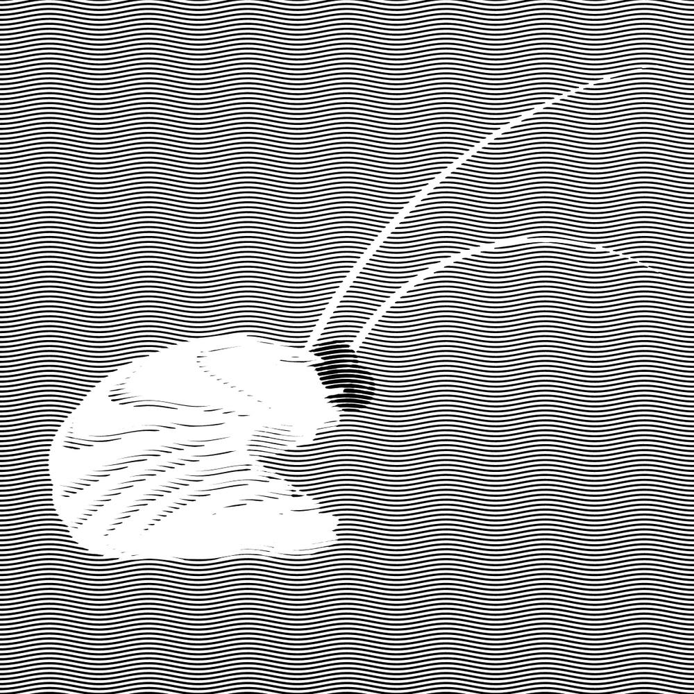 shrimp002.jpg