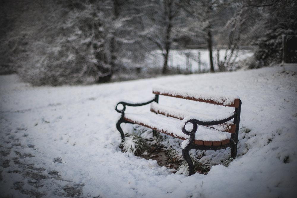 Apley Woods | Snow | R Orange Photography