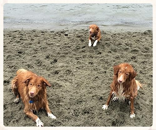Brigitte's Daintree dogs Finnegan, Millie and Cricket.