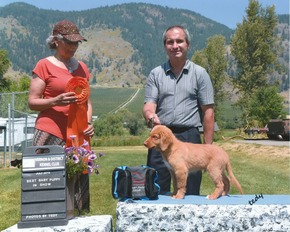 Sawyer went Best Baby Puppy in Show at the Vernon and District Kennel Club in July 2015. He went BBPIG all of the days of the show.
