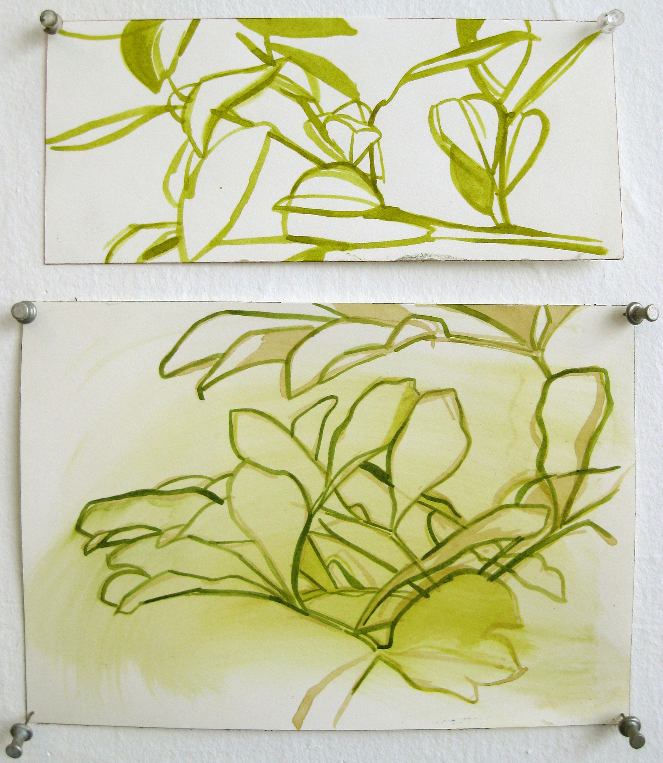 h20-leaf-drawings