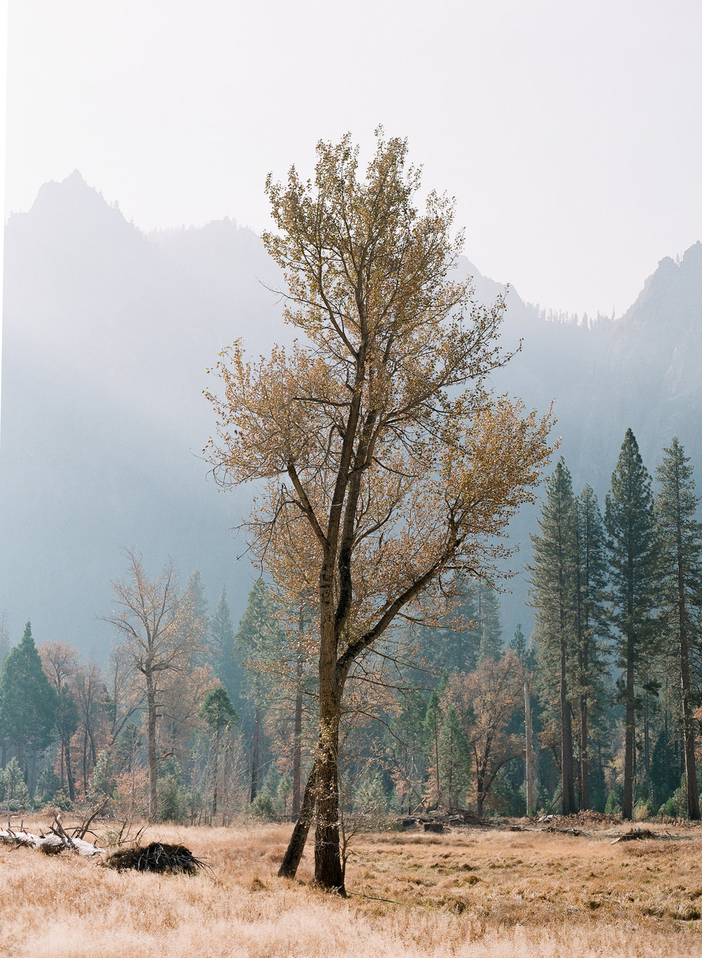 Lone Tree, El Capitan Meadow, Smoke