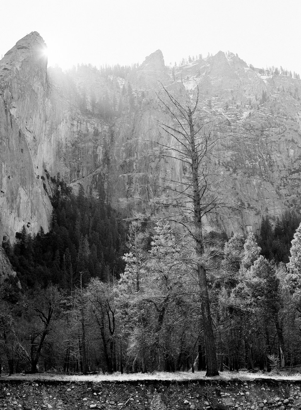Leaning Tower and Tree, Yosemite Valley