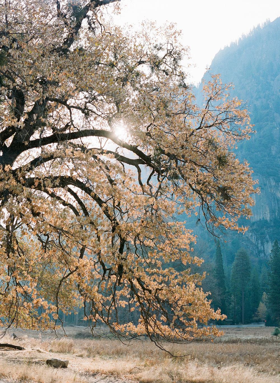 Brandon Sampson-2018-11-Yosemite-15.jpg