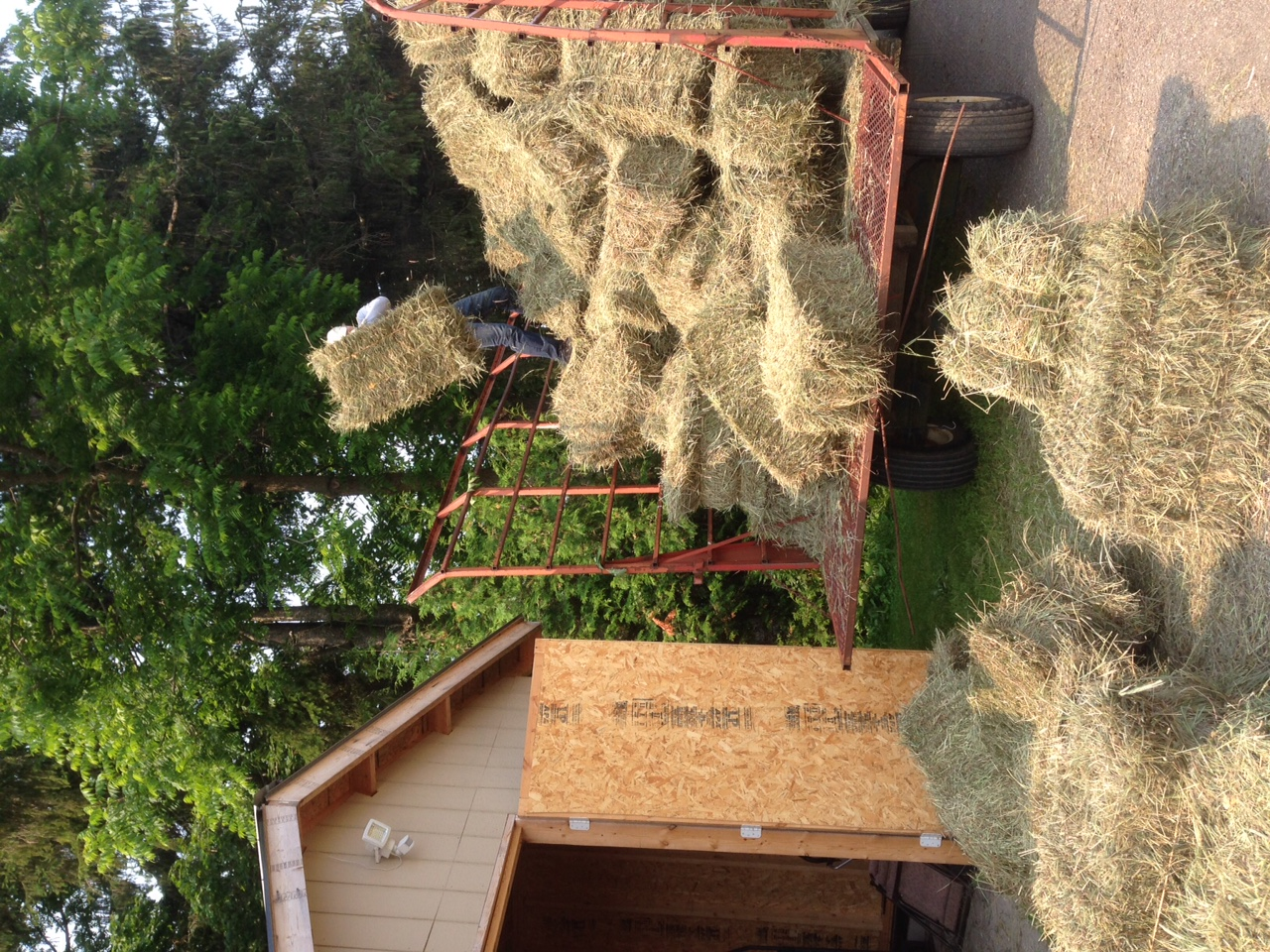 Joe unloading hay wagon.JPG