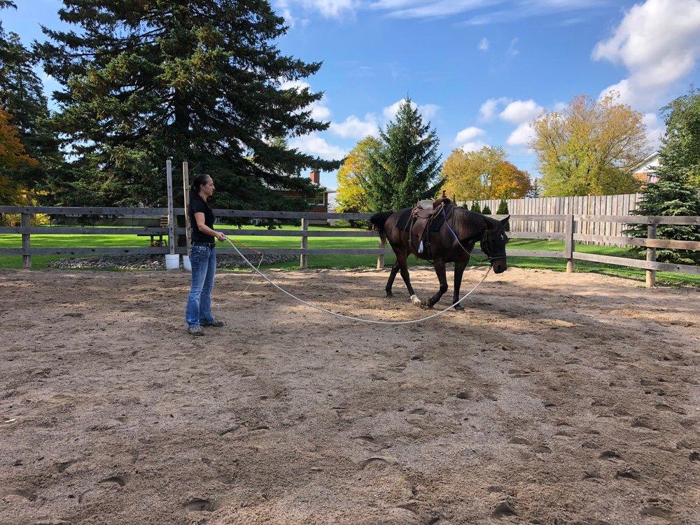 volunteer photo - lungeing horse.jpg