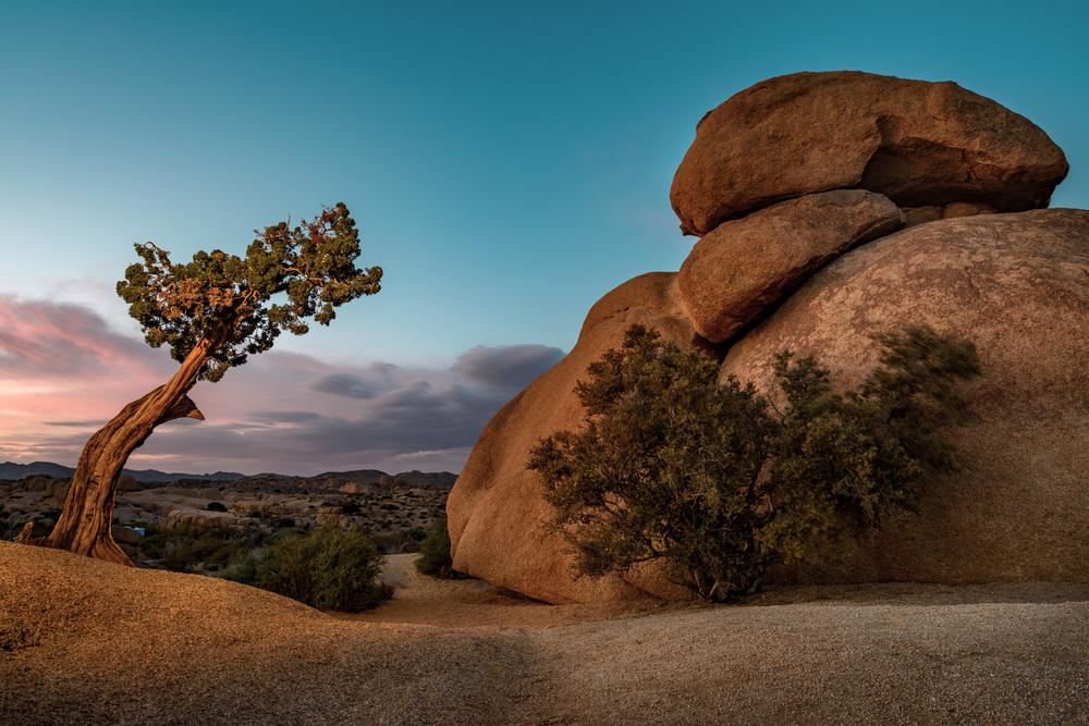 Joshua-Tree.jpg