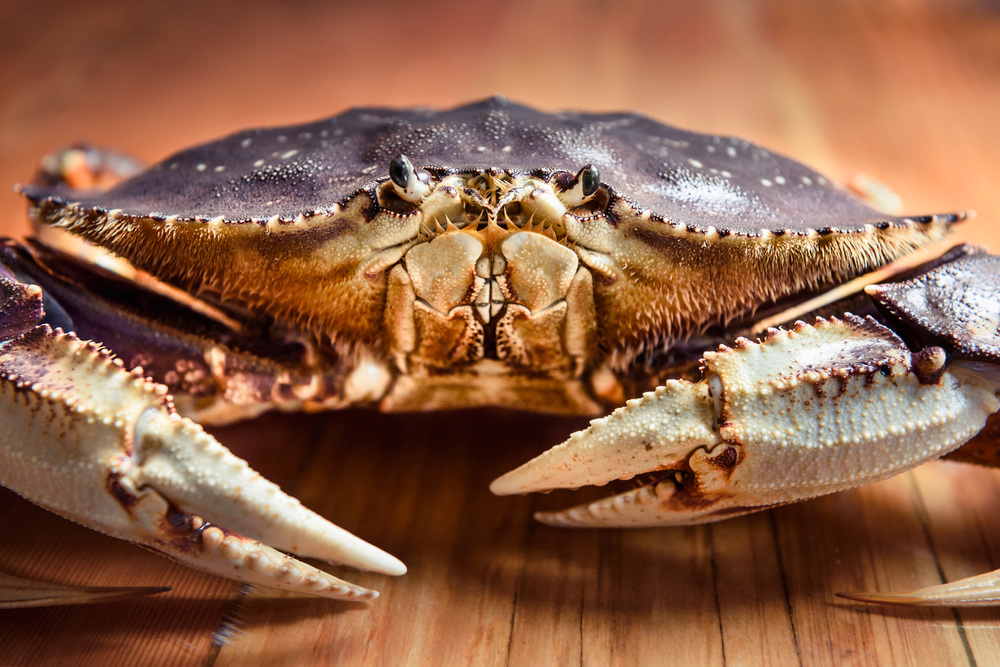 Dungeness-Crab.jpg