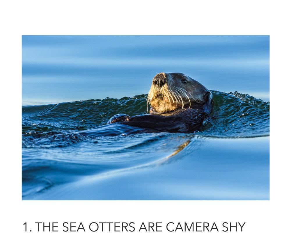 12 vancouver island photo workshop.jpg