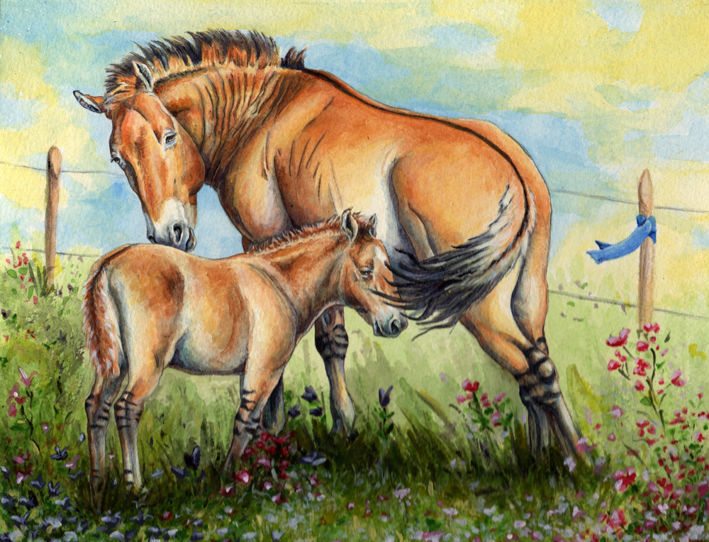 "Featured Art: ""Takhi Horse Foal in Spring"", from my story ""The Come Back of Mongolia's True Wild Horse"".  Picture book dummy available upon request."