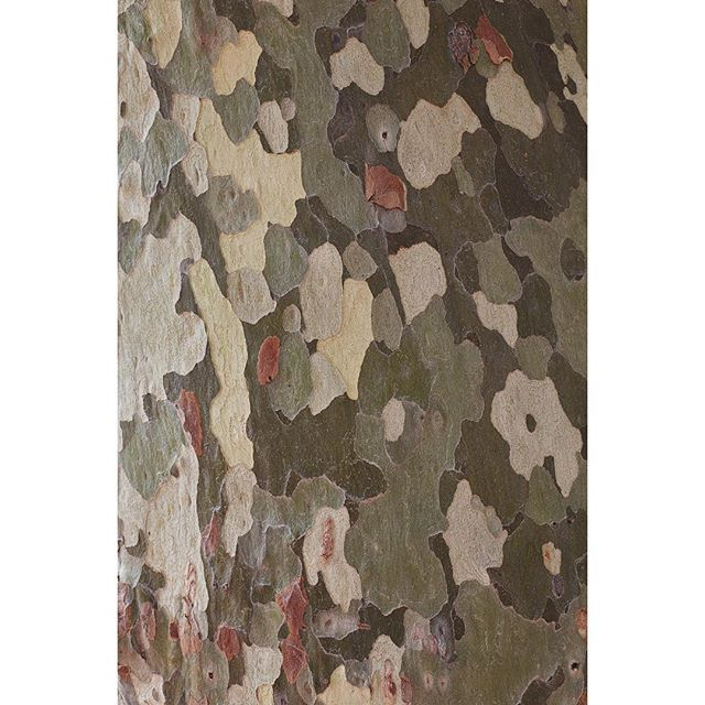 """Camouflage I by Frank Schott from a series of photographic observances  capturing nature's tactile textures and color palettes 72"""" x 48"""" / 182cm x 122cm edition of 7 #editionektalux  #1stdibs  #artsy"""