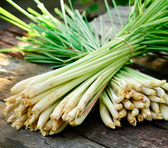 For The Love Of Lemongrass