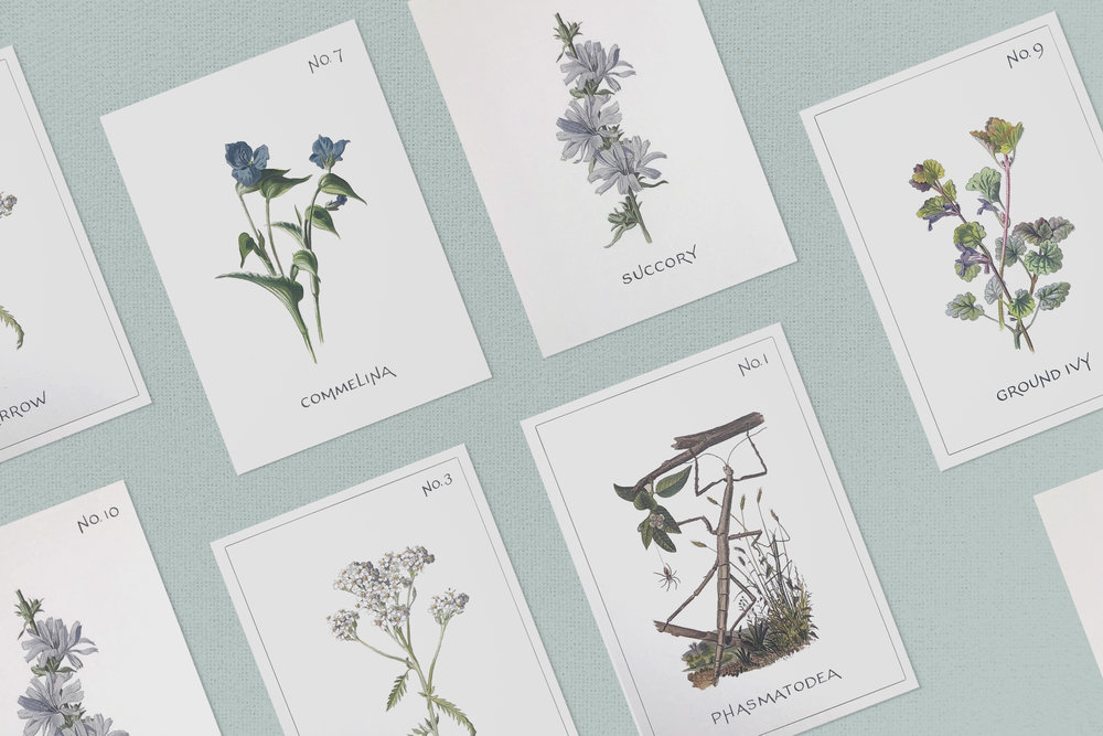 Wedding designs with Victorian botanical illustrations and hand calligraphy | www.chavelli.com