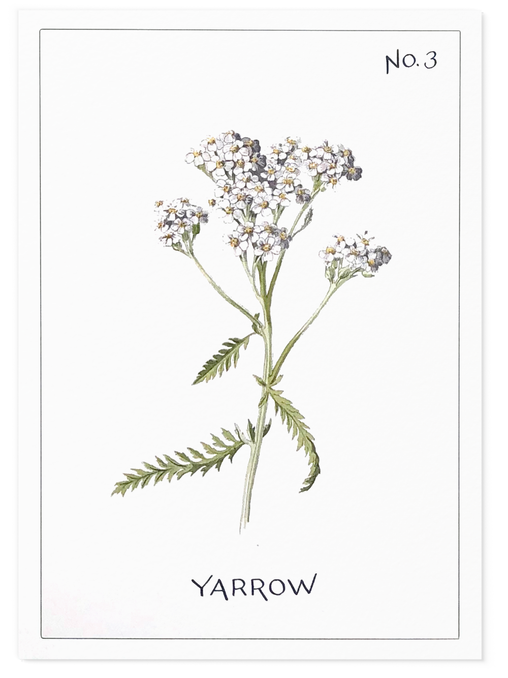 Yarrow botanical wedding card with calligraphy | www.chavelli.com