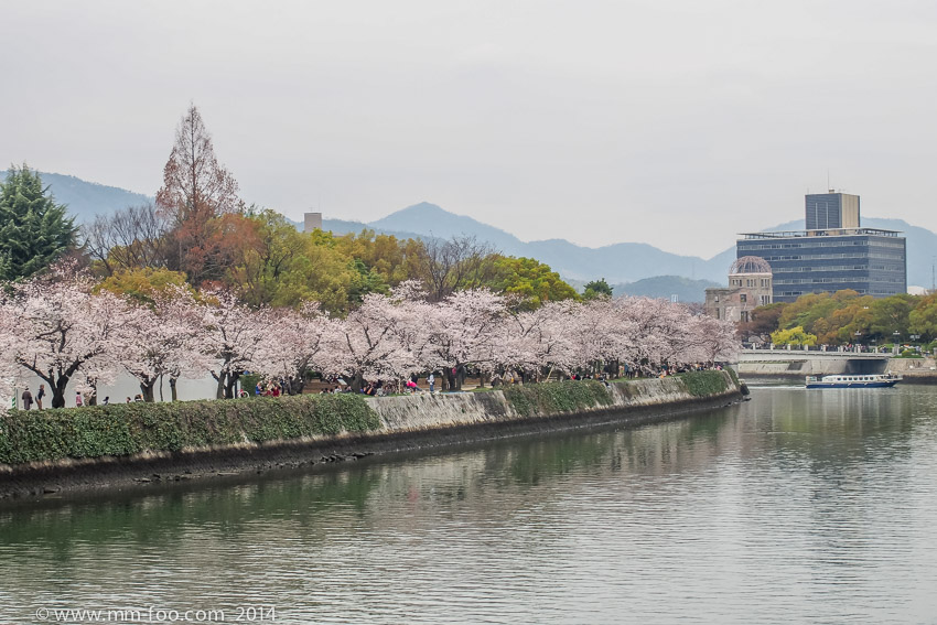 Sakura trees along the river~~