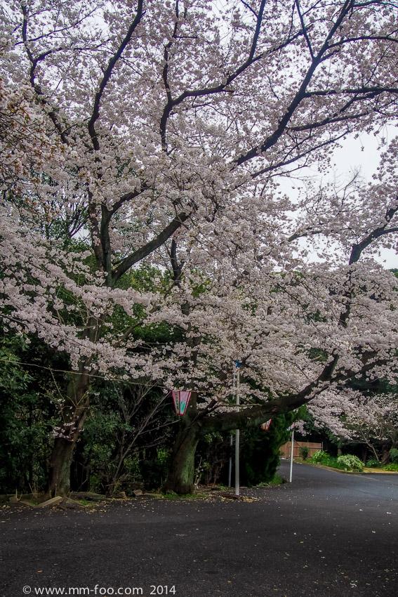 Hijiyama park!