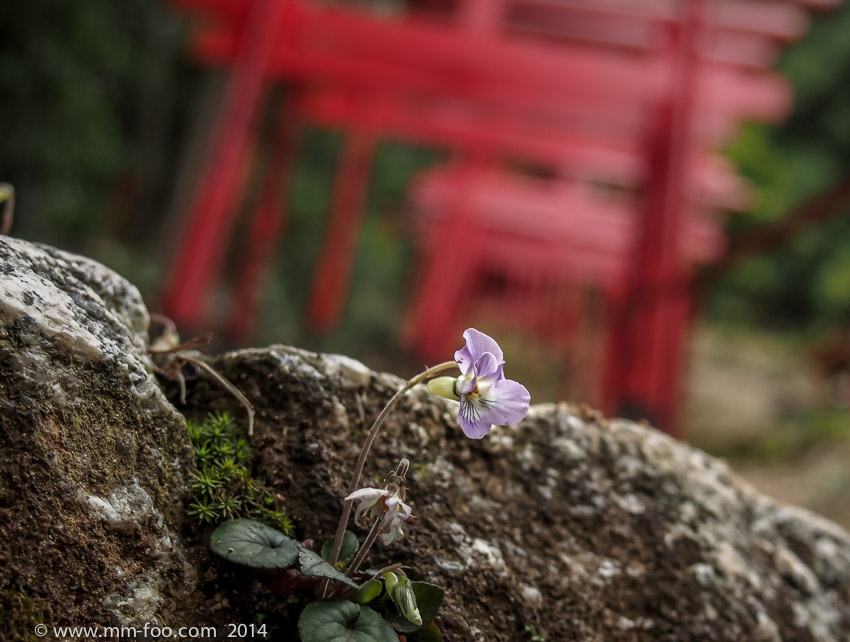 Small flower growing on a rock