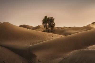 Desert_Rose_1200.jpg