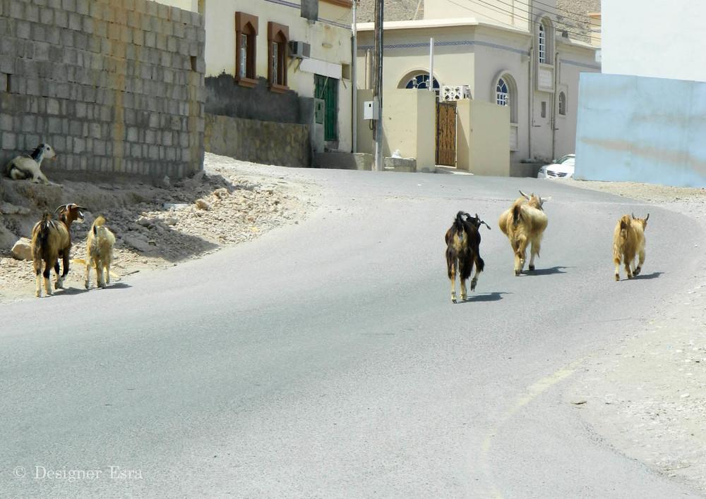 Street Goats