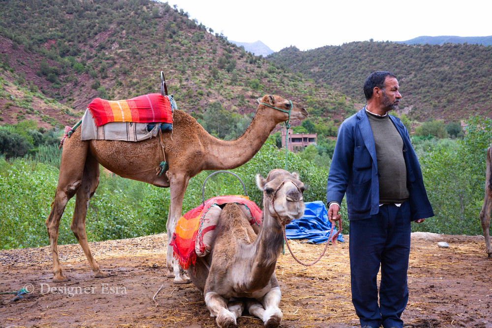 The Camels Man
