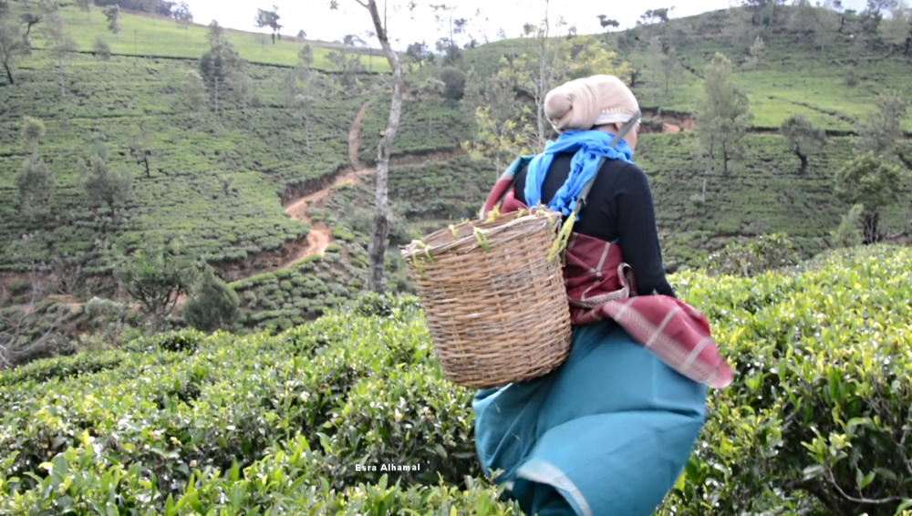 The tea plucking experience at the gorgeous Heritance Tea Factory