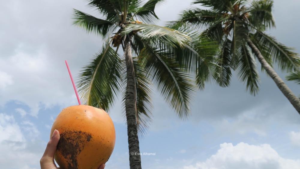 Fresh King Coconut from Sri Lanka