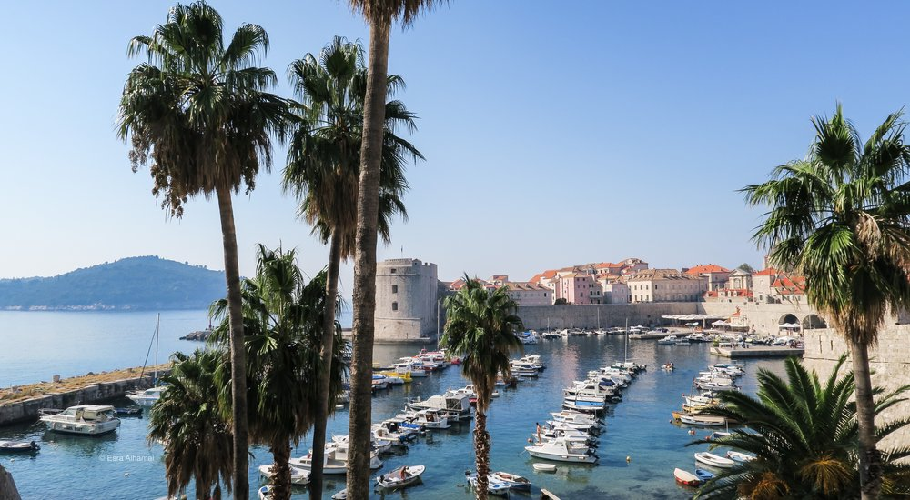 Dubrovnik Port and Palm Trees
