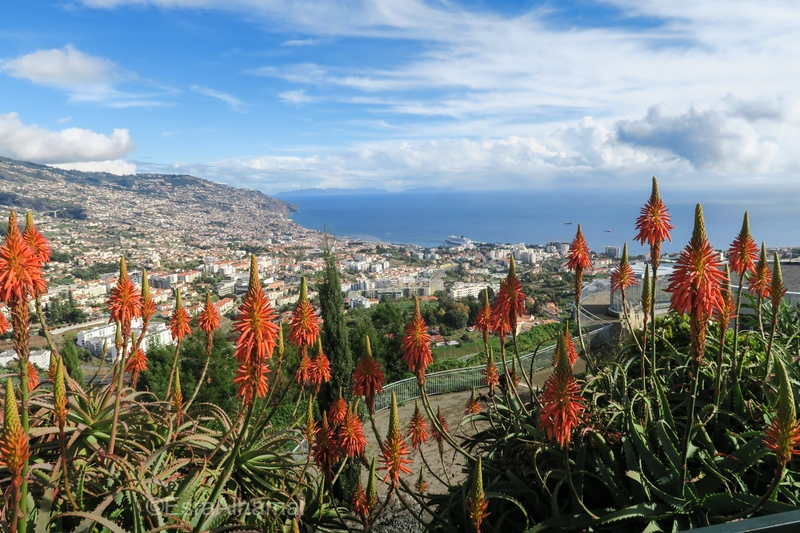 Five Days Itinerary in Madeira Island, Portugal