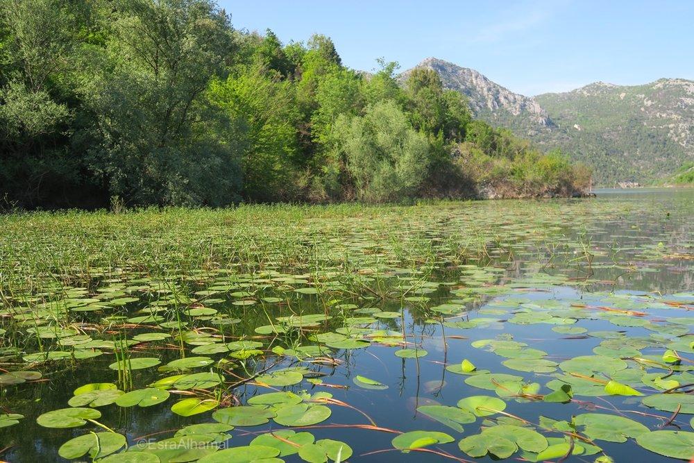 Boat trip in River Crnojevica, Montenegro