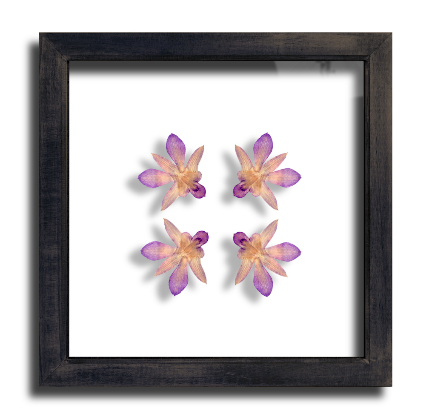 Orchid Framed Picture