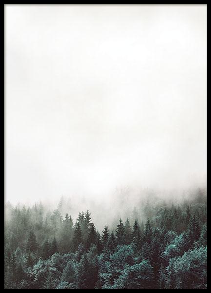 8154.jpg