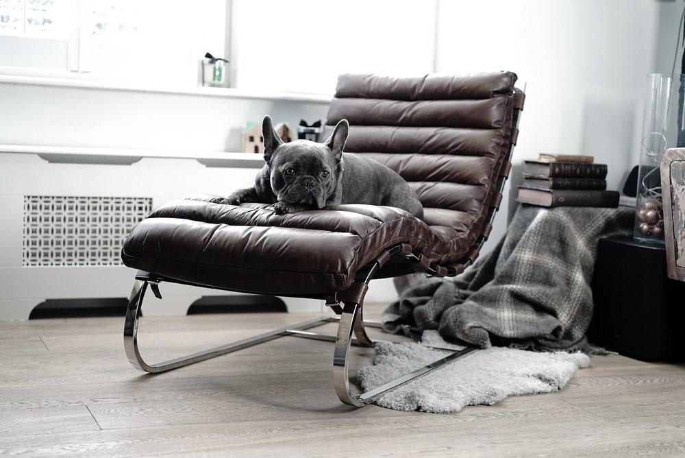 Charlie on Chair.jpg
