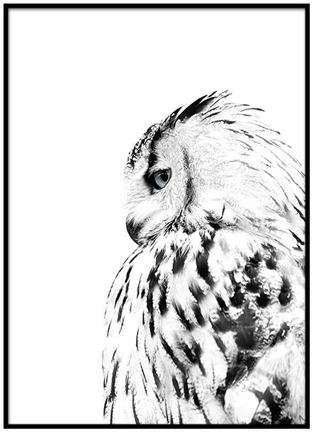 Desenio Owl Print £Various